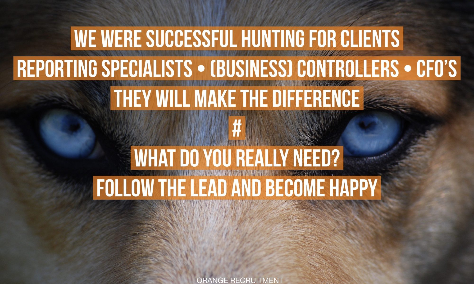 successful hunting for reporting specialists business controllers cfo